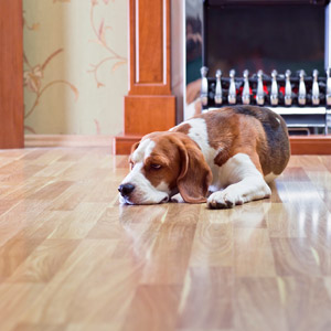 how to get dog urine smell out of hardwood floors | get smell out