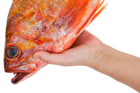 How to Get Fish Smell Out of Hands