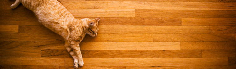 cat-hardwood-floor