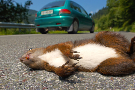 How to Get Roadkill Smell Off Car