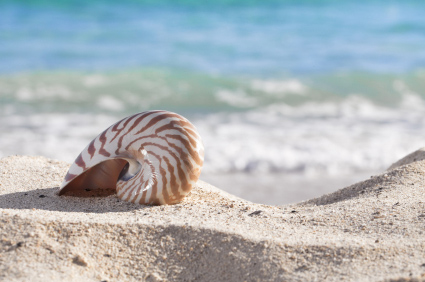 How to Get Smell Out of Sea Shells