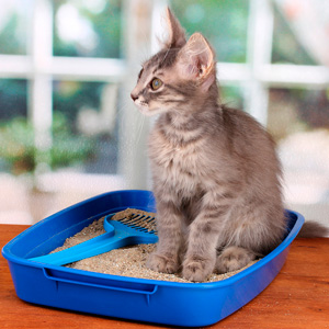 How to Get Rid of Smell in Cat Litter